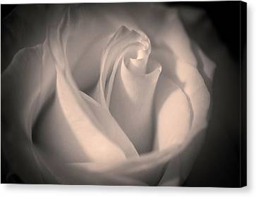 Silky Pastel Rose Canvas Print