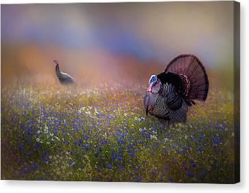 Spring Turkeys Canvas Print