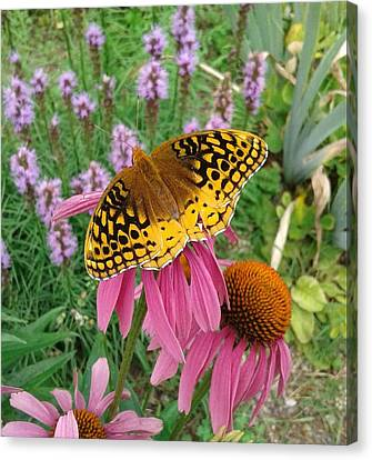 Springtime Butterfly Canvas Print