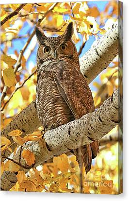 Statuesque Great Horned Owl Canvas Print