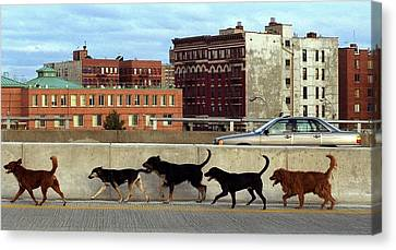 Stray Dogs Stroll Along The Bruckner Canvas Print by New York Daily News Archive