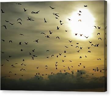 Sun Flock Canvas Print