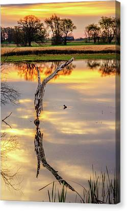 Sunrise Symmetry -  Reflected Tree And Duck On A Wisconsin Pond At Sunrise Canvas Print