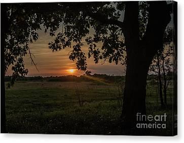 Sunset Under The Tree Canvas Print