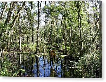 Swamp With Trees Canvas Print