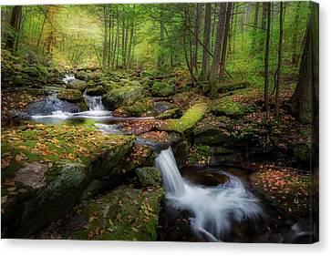 The Ethereal Forest Canvas Print