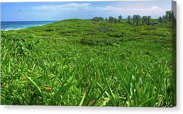The Green Island Canvas Print