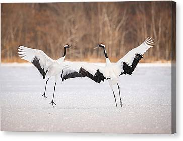 Grus Japonensis Canvas Prints Fine Art America