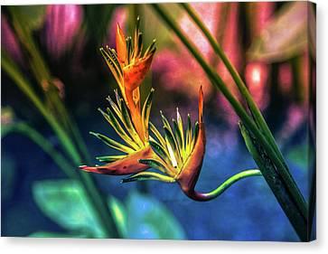 Vibrant Jungle Bird Canvas Print