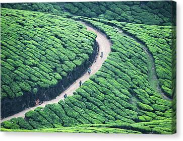 Way Home From Tea Plantation In Munnar by Www.igorlaptev.com