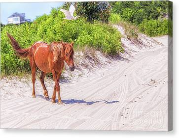 Wild Horses Outer Banks Two Canvas Print