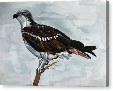 Wild Osprey Canvas Print