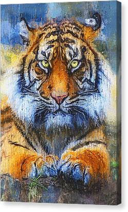 Wild Tiger - 22 Canvas Print