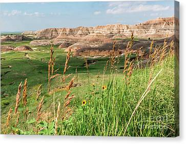 Wildflowers In The Badlands Canvas Print