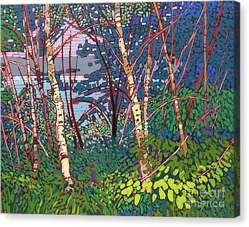 Window Through The Woods Canvas Print