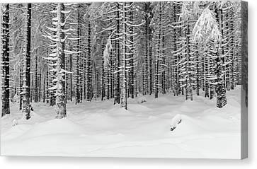 winter forest, Harz Canvas Print