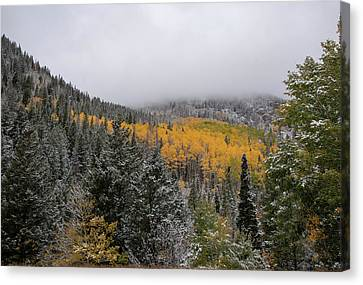 Winter In The Autumn Canyon Canvas Print