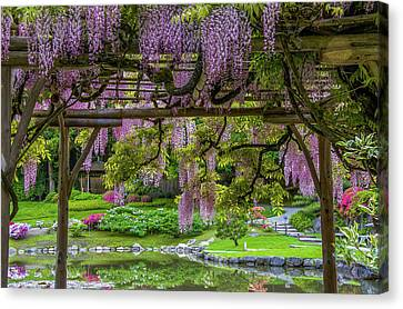Wonderful Wisteria Canvas Print