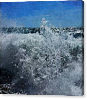 Levant Spray Canvas Print by Julian Perry