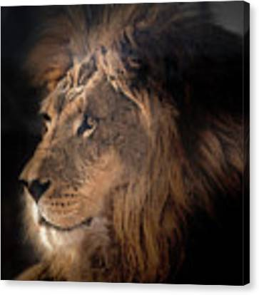 Lion King Of The Jungle Canvas Print by James Sage