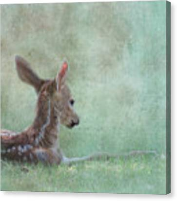 Tranquil Canvas Print by Sally Banfill