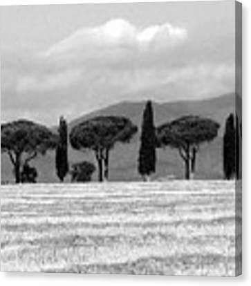 Tuscany Trees Canvas Print by Julian Perry