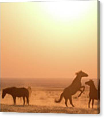 Wild Horse Sunset Canvas Print by Wesley Aston