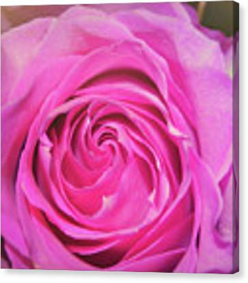 Hot Pink Canvas Print by JAMART Photography