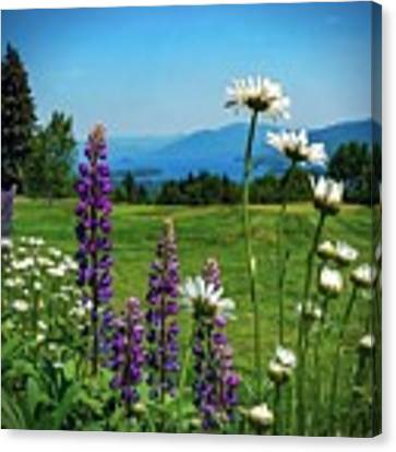 A June Day In Heaven Canvas Print by Kendall McKernon