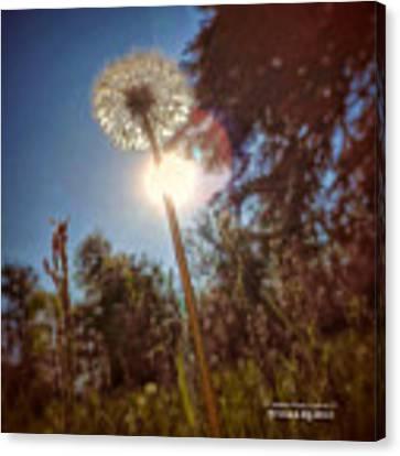A Shiny Flower Day Canvas Print by Stwayne Keubrick