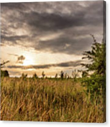 Across Golden Grass Canvas Print by Nick Bywater