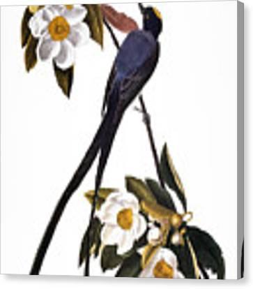 Audubon Flycatcher, 1827 Canvas Print by John James Audubon