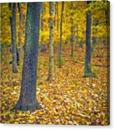 Autumn Canvas Print by Samuel M Purvis III