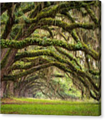 Avenue Of Oaks - Charleston Sc Plantation Live Oak Trees Forest Landscape Canvas Print