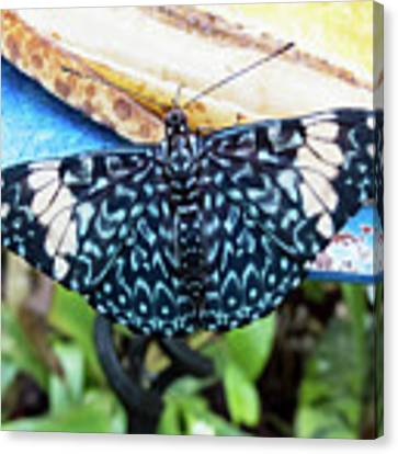 Beautiful Blue And White Butterfly Canvas Print by Bob Slitzan