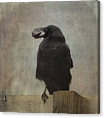 Beware Of Crows Canvas Print by Sally Banfill