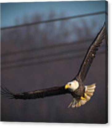 Bird In Flight  Canvas Print by Cindy Lark Hartman