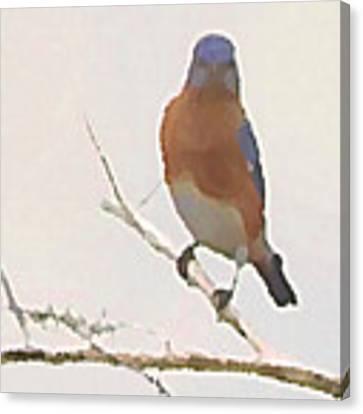Bluebird Stare  Canvas Print by Shelli Fitzpatrick