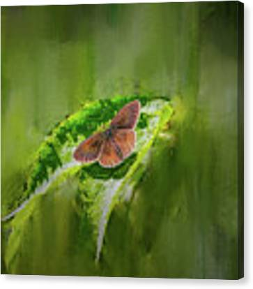 Brown Butterfly #h6 Canvas Print by Leif Sohlman