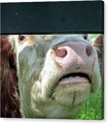 Bull's Eye Peek A Boo Deekflo Canvas Print by Dee Flouton
