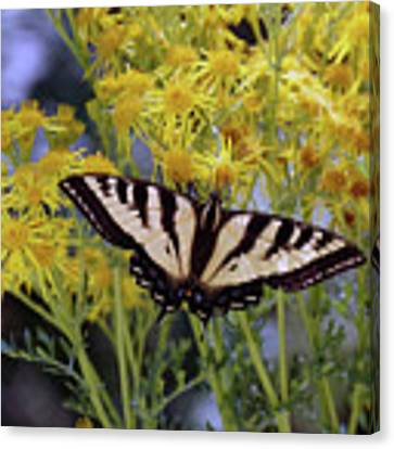 Butterfly At Wilson Creek #3 Canvas Print by Ben Upham III