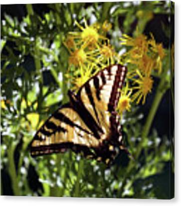 Butterfly At Wilson Creek #4 Canvas Print by Ben Upham III