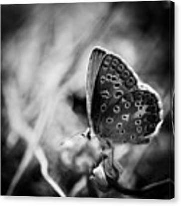 Butterfly In Black And White Canvas Print by Mirko Chessari