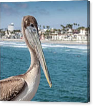 California Pelican Canvas Print by John Wadleigh