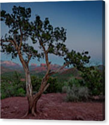 Cathedral Rock Overview Canvas Print by Gary Lengyel