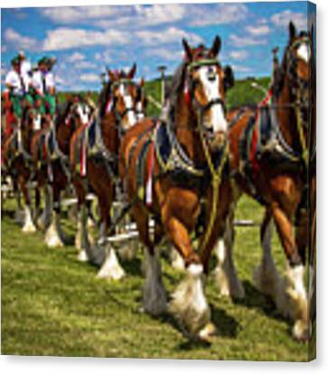 Budweiser Clydesdale Horses Canvas Print by Robert L Jackson