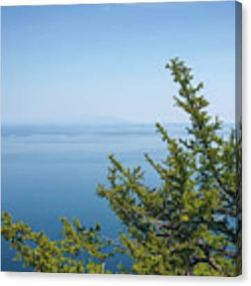Coniferous Trees On Blue Sky Background Canvas Print by Sergey Taran