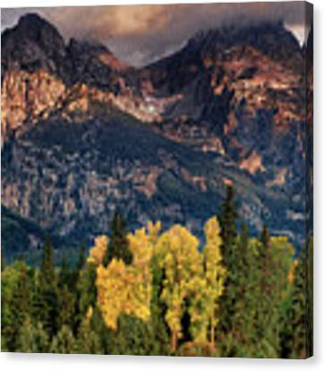 Cottonwoods Fir Trees Fall Color Grand Tetons Nat Canvas Print by Dave Welling