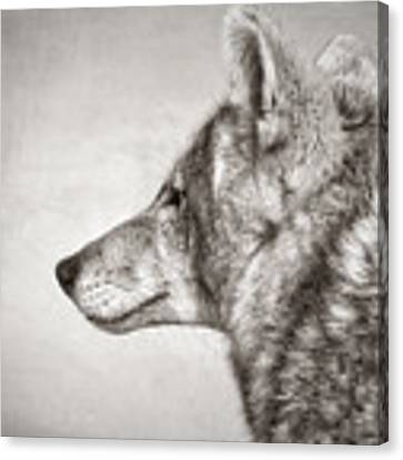 Coyote Profile Canvas Print by Elaine Malott
