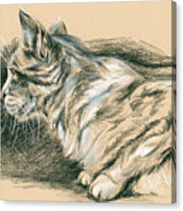 Crouching Tabby Canvas Print by MM Anderson
